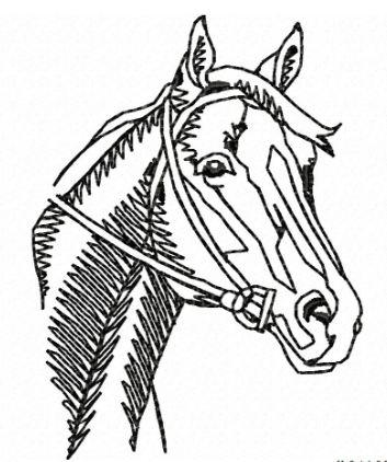 Pferd 09