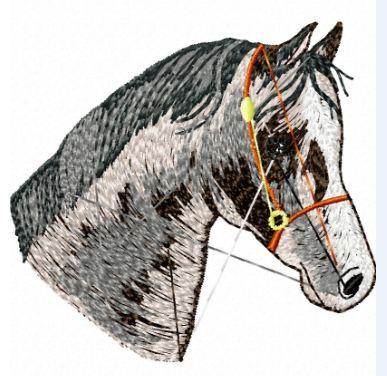 Pferd 18
